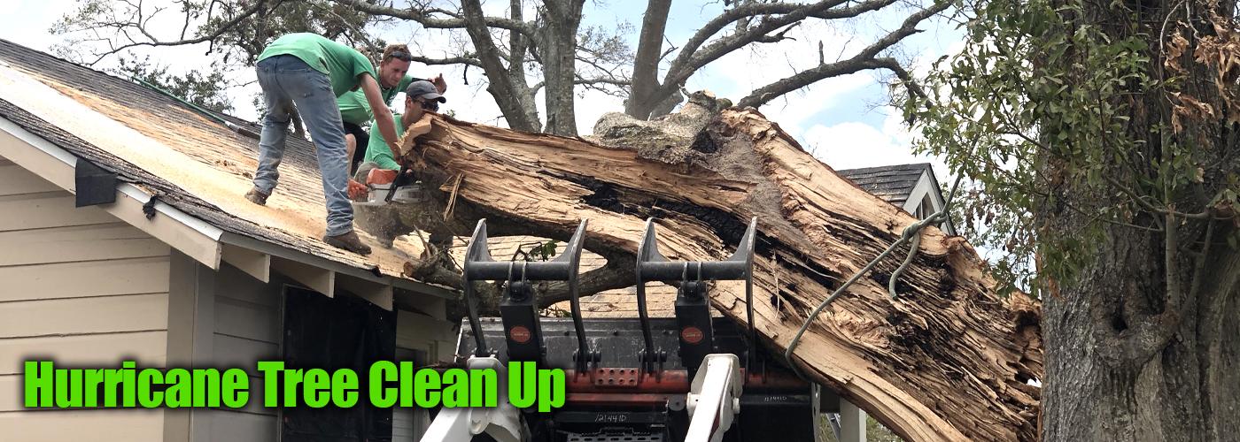 Speedy Tree Services slider 12