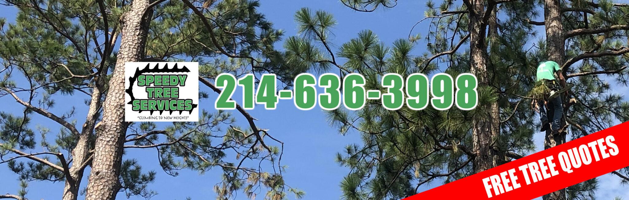 Speedy Tree slider 4 -2021