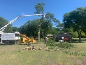 Speedy Tree Services - Farmersville TX