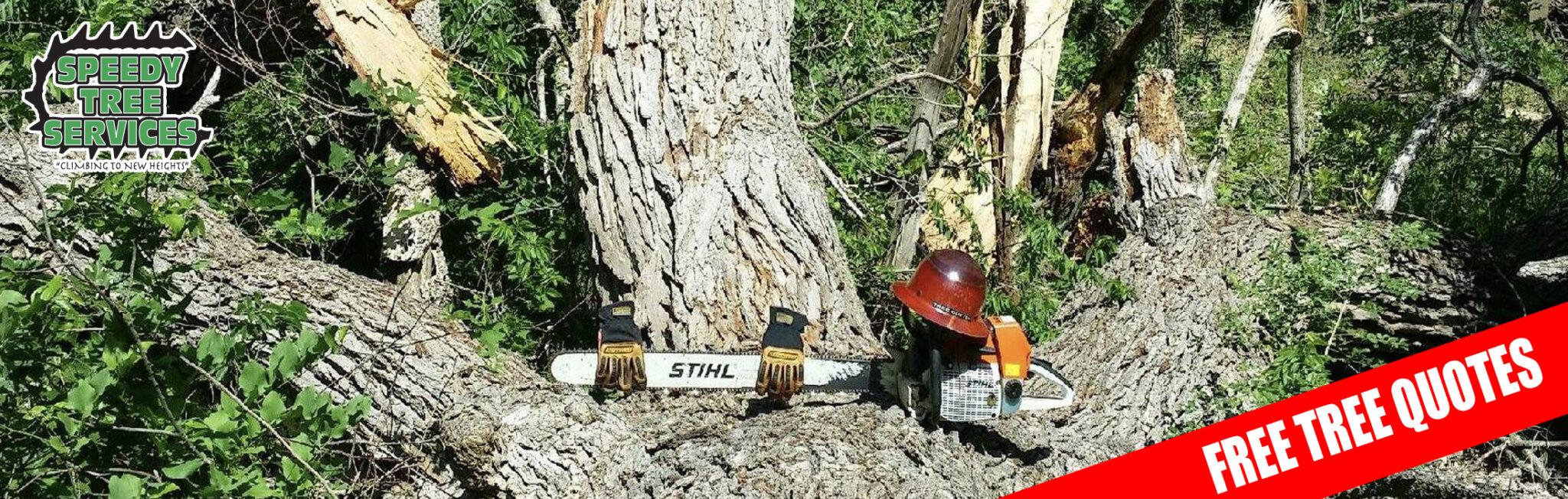 Speedy Tree slider 3 -2021